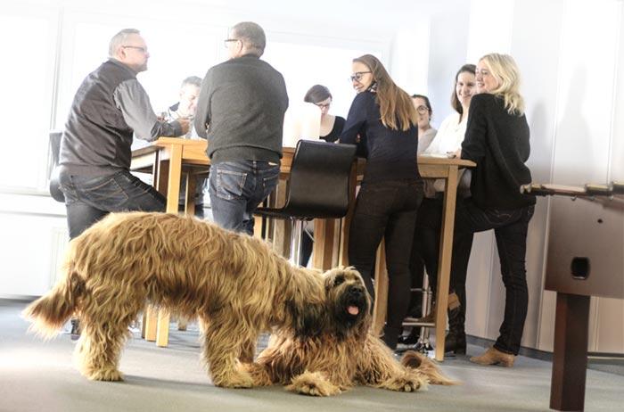 Team mit Bürohunden
